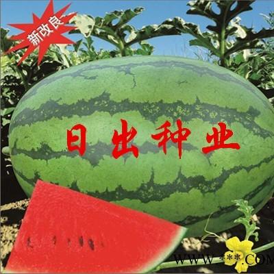 供应改良西农八号——西瓜种子