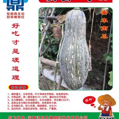 供应安蜜1号 F1—南瓜种子
