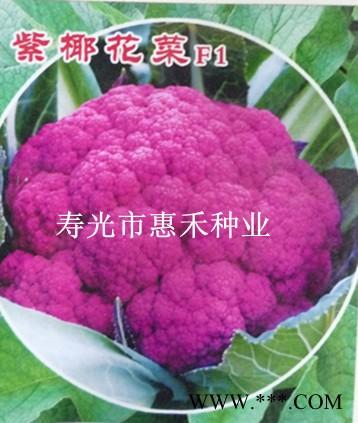供应紫椰花菜F—花椰菜种子