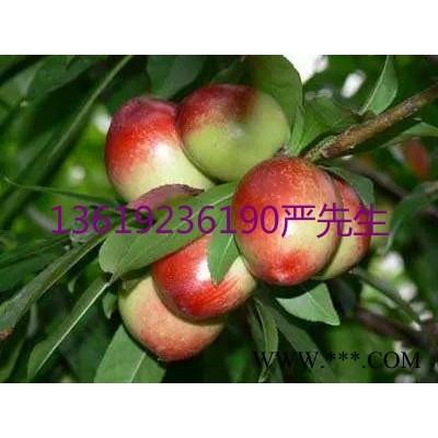 供应中油5油桃