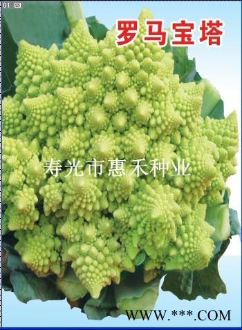 供应罗马宝塔F1—花椰菜种子