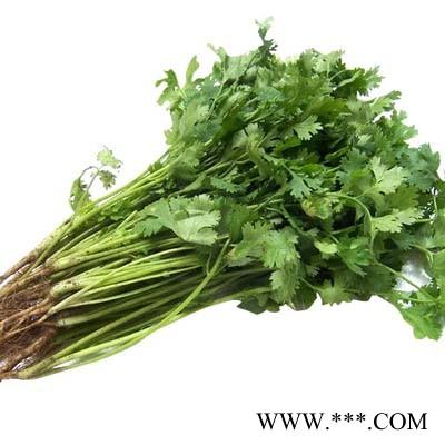 供应胜优—香菜种子