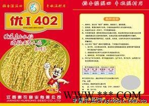 供应金优F6(杂交水稻)