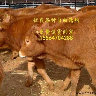 供应甘肃兰州肉牛