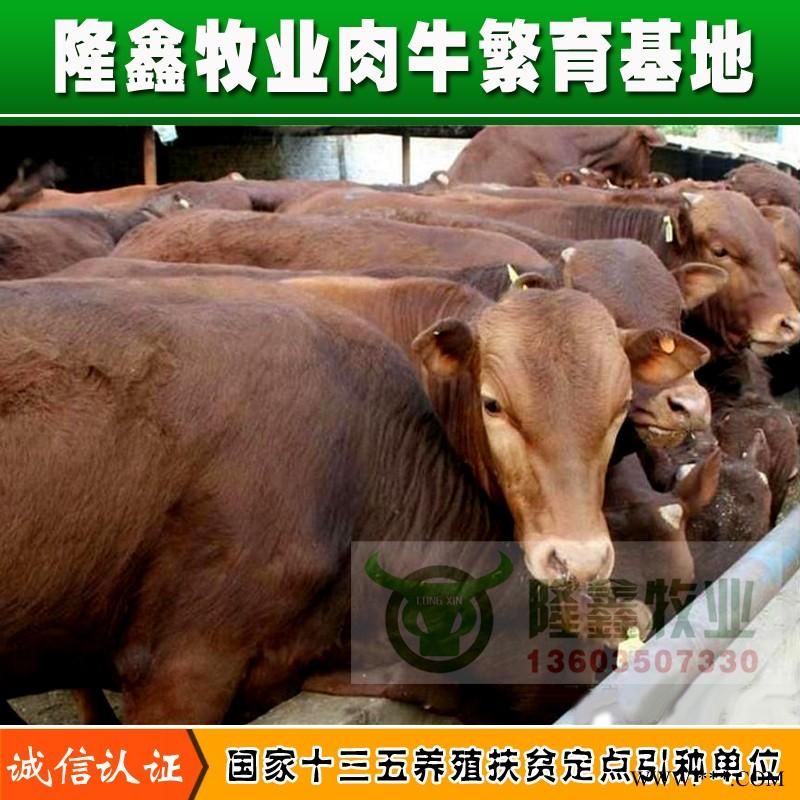 供应利木赞肉牛犊