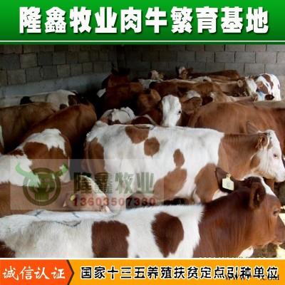 供应山西肉牛