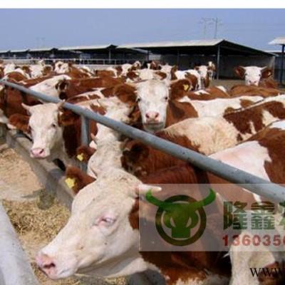 供应西门塔尔肉牛