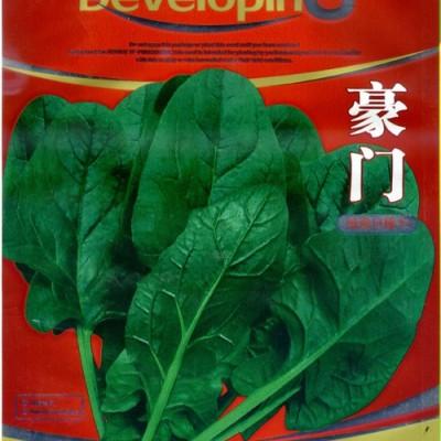 供应豪门——菠菜种子