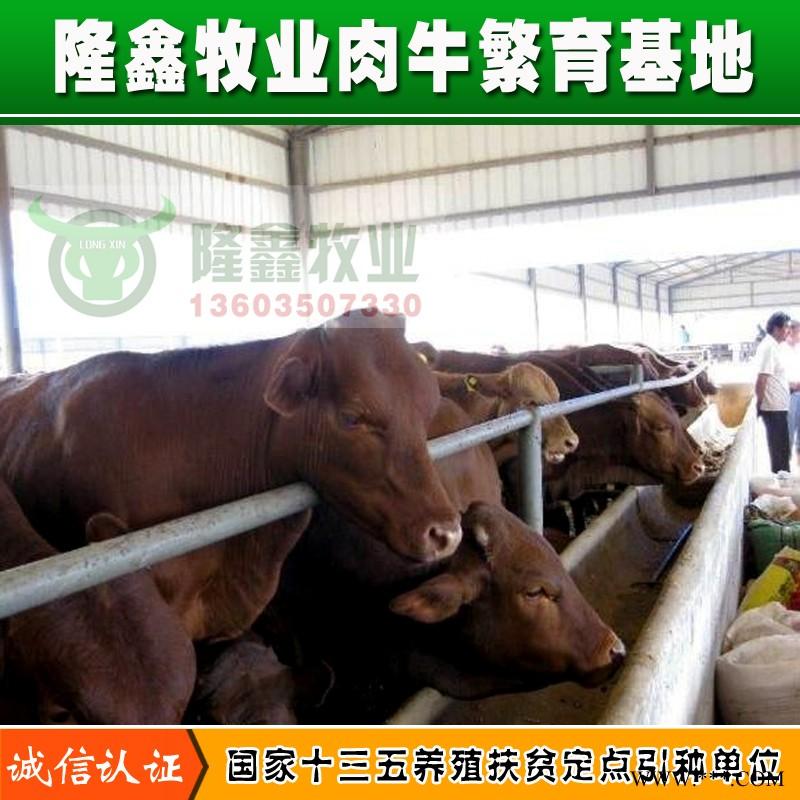 供应利木赞肉牛