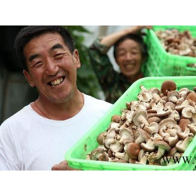 食用菌:出口级、液体香菇菌棒(菌包),18*60袋3kg