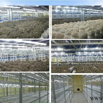 容毅农业照明 食用菌种植灯带 食用菌栽培LED灯 食用菌种植 LED灯