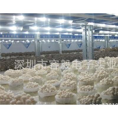 容毅农业照明 LED海鲜菇灯 白灵菇专用灯 白玉菇生长灯 食用菌补光灯