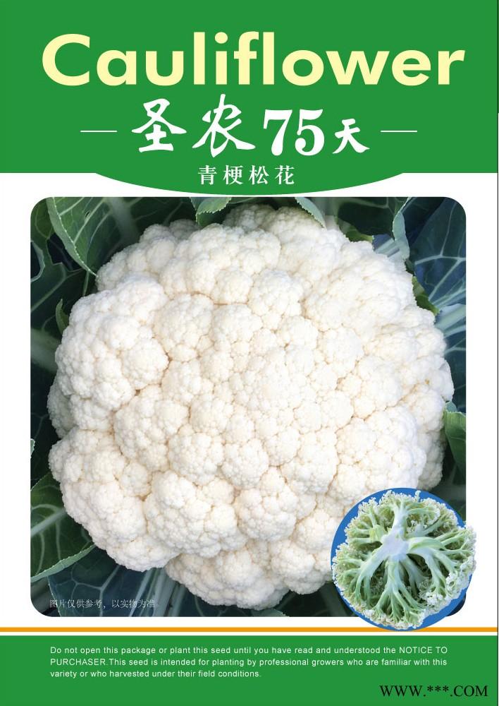 供应圣农75天松花菜