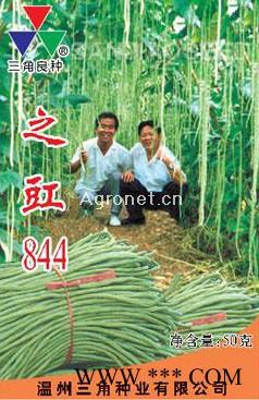 供应之豇844—豇豆种子