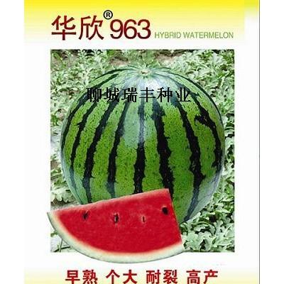 供应华欣963-西瓜种子