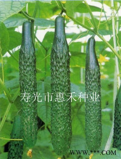 供应45-1---黄瓜种子