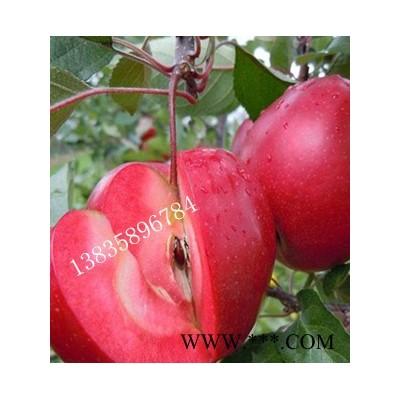 供应红肉苹果苗,里外红苹果苗,红爱苹果苗