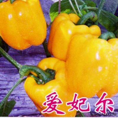 供应爱妃尔—甜椒种子
