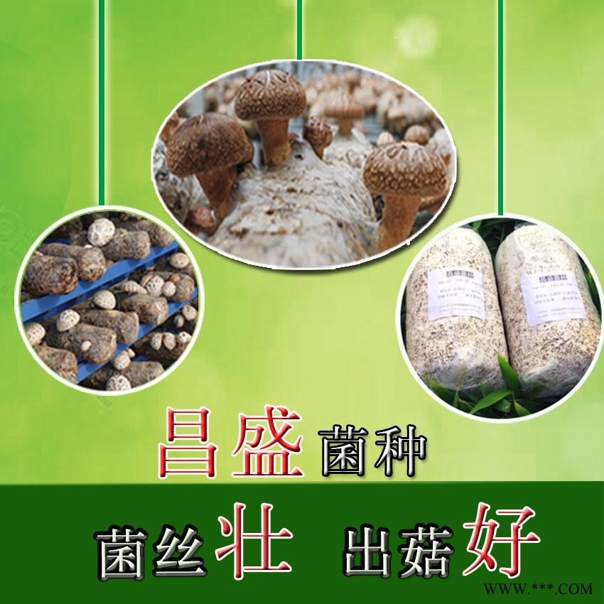 供应昌盛优质819香菇菌种 菇质瓷实产出量高