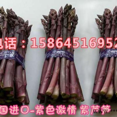 供应紫芦笋种子