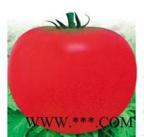 供应抗病402番茄-番茄种子