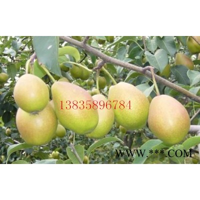 供应大梨树