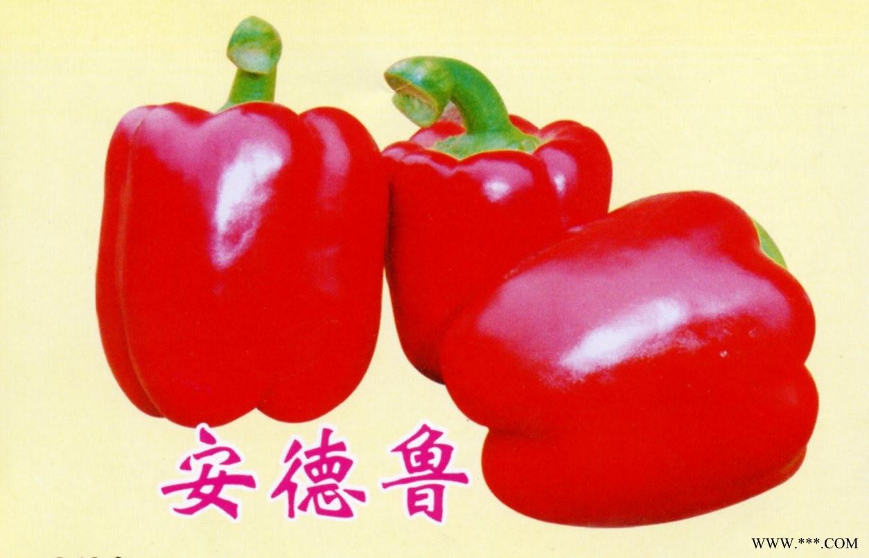 供应进口甜辣椒种子,番茄种子