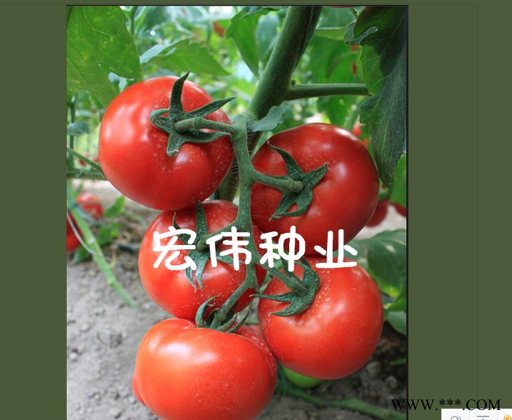 供应全能126抗tv大红番茄—番茄种子