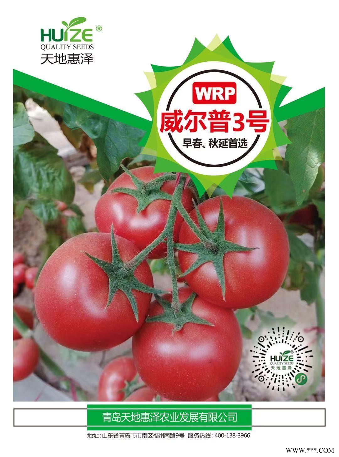 供应泰森-3番茄种子