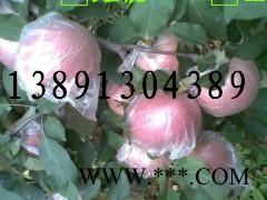 供应红富士苹果