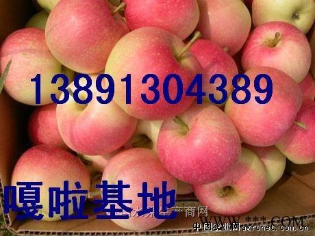 陕西嘎啦苹果