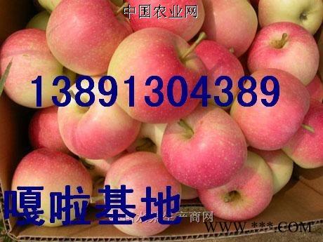 供应美八苹果,晨阳苹果,夏红苹果