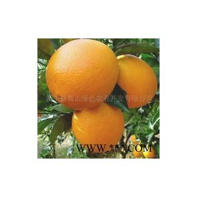 供应北纬26脐橙