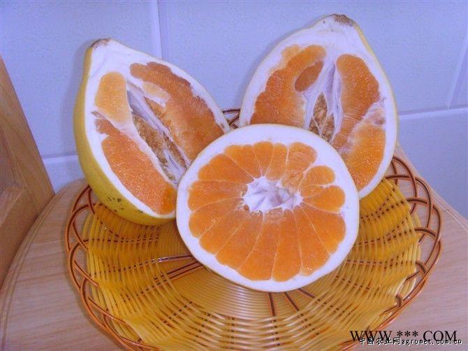 供应琯溪黄肉蜜柚