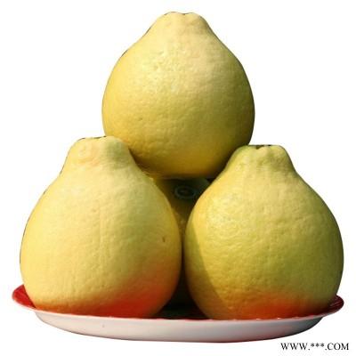 供应沙田柚