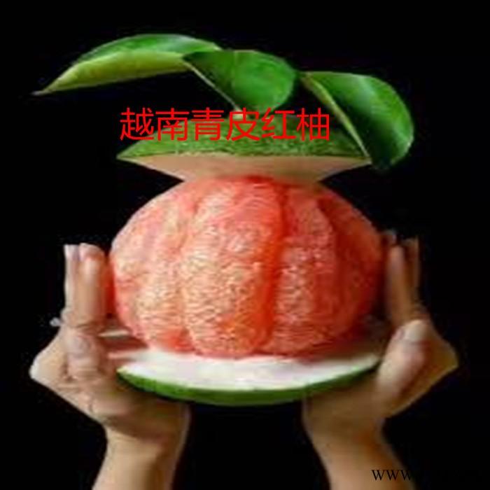 供应越南青皮红柚苗
