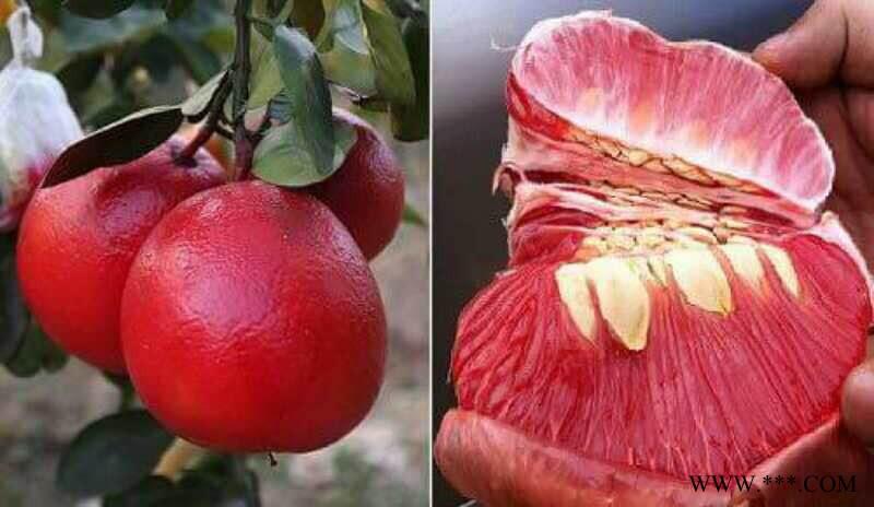 供应越南进皇柚