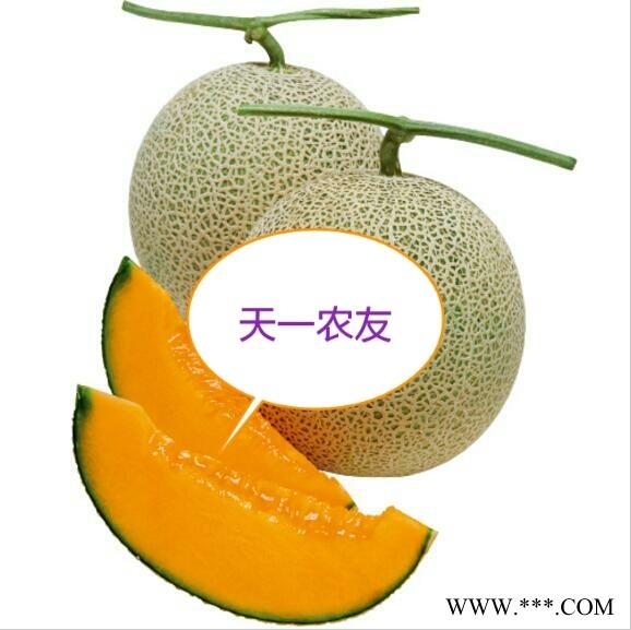 供应进口夕张网纹甜瓜种子