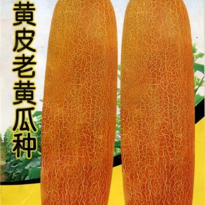供应黄皮老黄瓜种-黄瓜种子