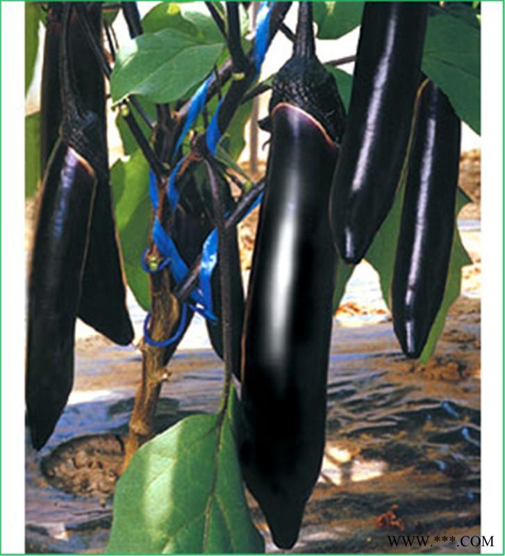 供应黑将军—茄子种子
