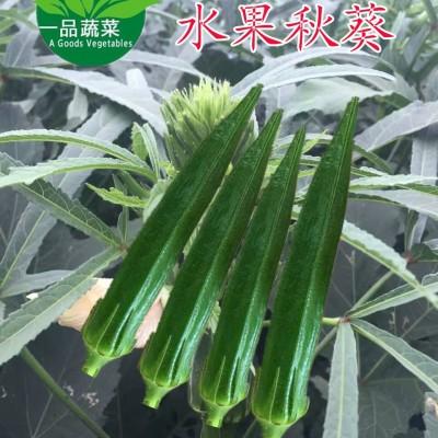 供应日本水果秋葵种子