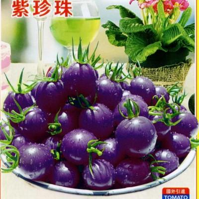 供应紫珍珠-番茄种子