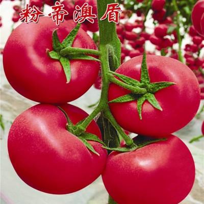 供应西红柿种子