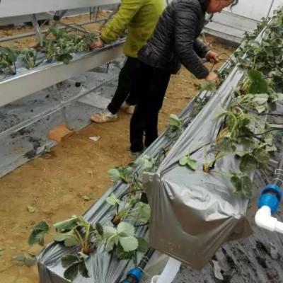 供应蔬菜瓜果立体基质栽培槽