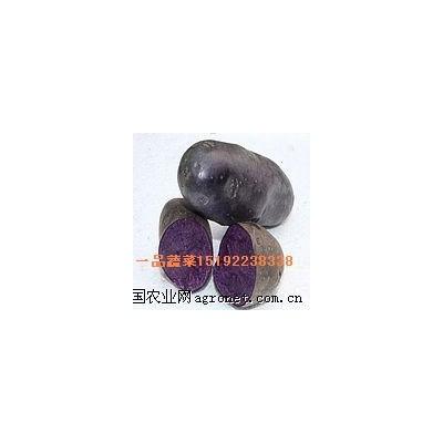供应脱毒紫土豆
