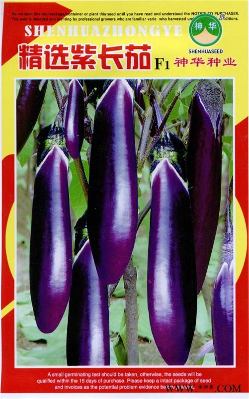 供应精选紫长茄-茄子种子