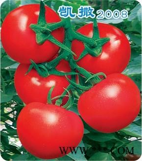供应凯撒2008——番茄种子