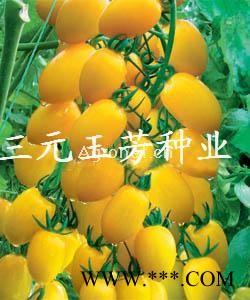 供应金帅1109 —番茄种子
