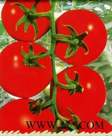 供应帅特F101—番茄种子