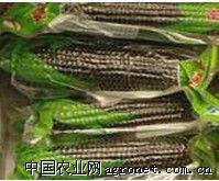 供应黑玉米